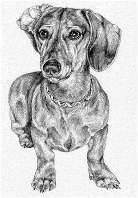 The 25+ best Dachshund drawing ideas on Pinterest