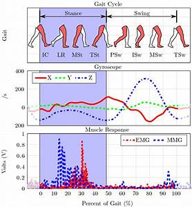 Analysis Of Motion And Muscle Response During One Gait