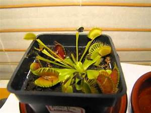 Plante Repulsif Mouche : evolution plante carnivore eau min rale mouche youtube ~ Melissatoandfro.com Idées de Décoration