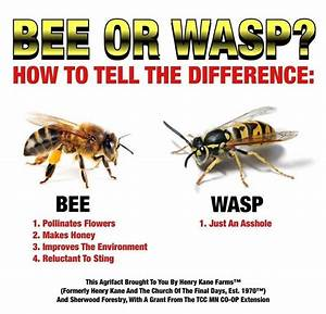 Bee or Wasp? | Odd Concepts