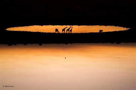 Heaven On Earth Marina Cano Mammals Wildlife