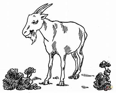 Coloring Goat Ausmalbilder Koza Colorare Disegni Kozy