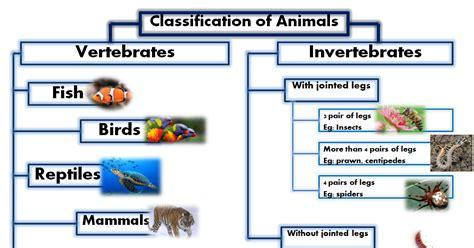 Animal's: Classification of Animals