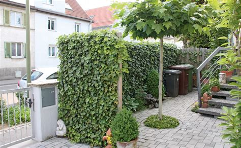 Garten Trennwände Sichtschutz Beispiele by Occultations Pour Le Jardin Et La Terrasse Hornbach Suisse
