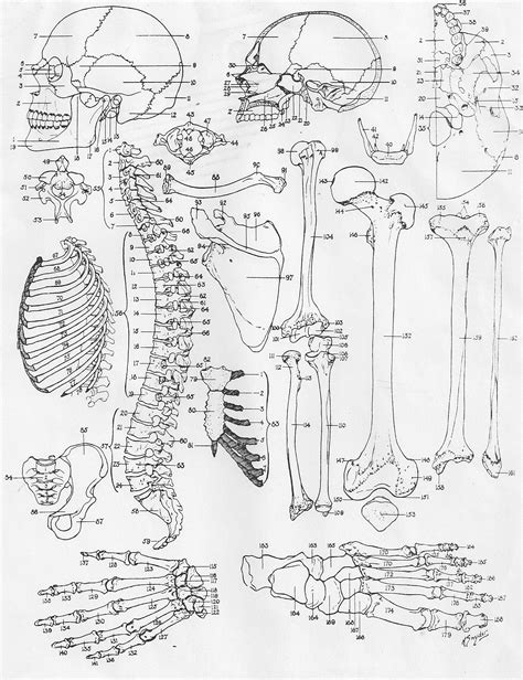 anatomy of a bone coloring bone coloring pages coloring pages