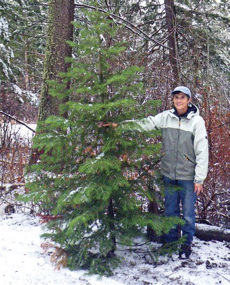 utah tree permits forest service tree permits sales for boise and payette national forest begin november 22 local