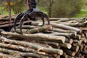Stammholz Buche Preis : stammholz brennholz ofenholz sams gartenhaus shop ~ Orissabook.com Haus und Dekorationen