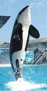 List Of Captive Orcas