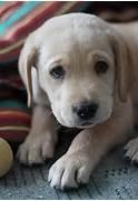 Cute Sad Puppy Face Im...Sad Puppy