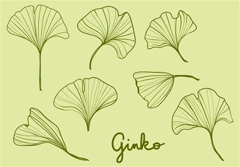 hand drawn ginko leaves   vector art stock