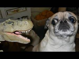 Dogs just never fail to make us laugh - Funny dog ...