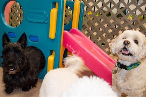 clancy  fun  tail gate dog daycare  boarding