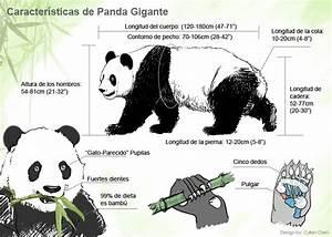Características de panda gigante viaje a china