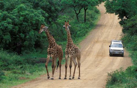 Hluhluwe Game Reserve Road Closed  Zululand Observer