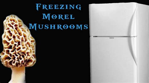 can you freeze fresh mushrooms how to freeze morel mushrooms youtube