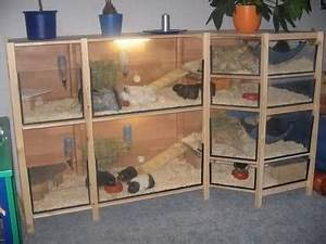 Meerschweinchen Gehege Ikea : guinea pig habitat made from ikea ivar units ikea ivar ideas pinterest meerschweinchen ~ Orissabook.com Haus und Dekorationen