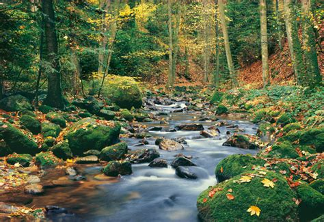 mural autumn graphics picture autumn forest wall mural Forest