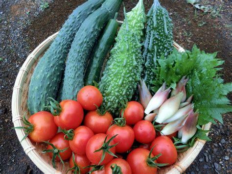 2 月 に 植える 野菜