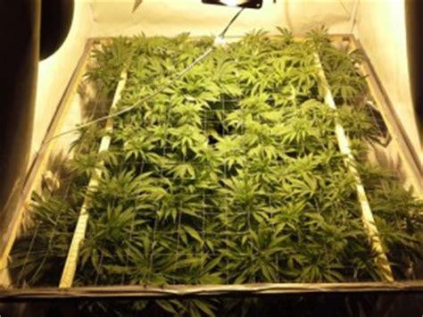 chambre culture cannabis culture intérieur ou extérieur comment choisir