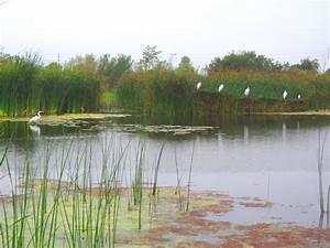 Jocelyn Enevoldsen  Coastal Wetlands Recovery In Southern