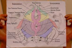 pelvic health and alignment pelvic floor muscles and pregnancy