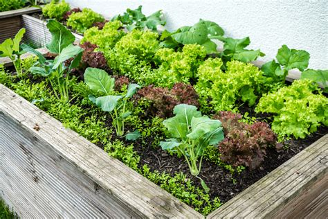 Garten Hochbeet Pflanzen by Low Budget Hochbeet Selber Bauen Anleitung Tipps Zur