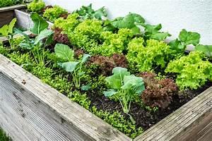 Ab Wann Erdbeeren Pflanzen : low budget hochbeet selber bauen anleitung tipps zur bepflanzung ~ Eleganceandgraceweddings.com Haus und Dekorationen