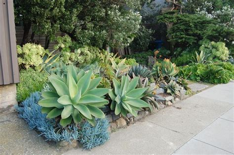 agave garden 16 best images about tropical gardens for zone 7 on pinterest