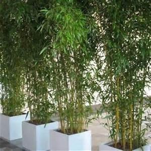 Rhizomsperre Selber Bauen : die besten 25 bambus im k bel ideen auf pinterest ~ Watch28wear.com Haus und Dekorationen