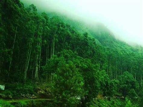 Download Wallpapers Hd Nature Munnar