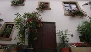 Oleander Stecklinge Wurzeln Nicht : schatzkiste oleander burgenland heute ~ Lizthompson.info Haus und Dekorationen