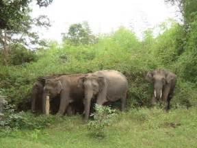 Jungle Animals Elephant