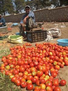 FARM FRESH TOMATOES FOR SALE products,Cameroon FARM FRESH ...