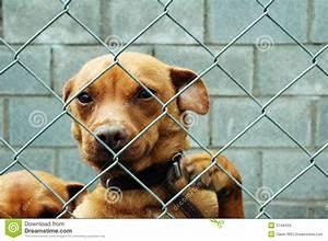 Günstiger Zaun Für Hund : hund hinter einem zaun stockbilder bild 3144434 ~ Frokenaadalensverden.com Haus und Dekorationen