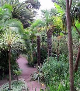 Phoenix Canariensis Entretien : entretien et hivernage du palmier gamm vert ~ Melissatoandfro.com Idées de Décoration