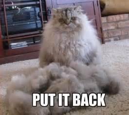 cat jokes cat put it back jokes memes pictures