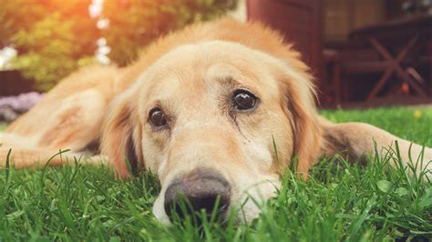 Dog Dies Of Heat Stroke After Being Left Outdoors For