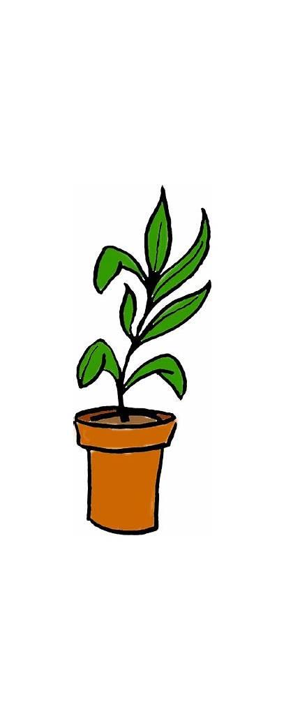 Plants Plant Potted Clipart Clip