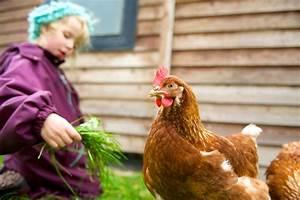 Comment Elever Des Poules : les bons conseils pour lever des poules ~ Melissatoandfro.com Idées de Décoration