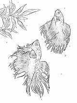 Coloring Fish Pages Betta Printable Getcolorings sketch template