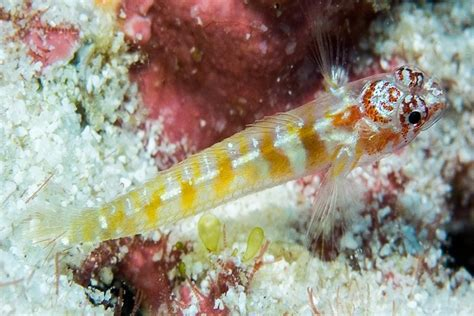 Fish Discovery In Seychelles Is Confirmed As New Species