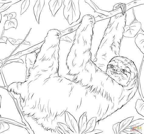 sloth coloring page  printable coloring pages