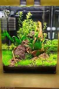 Co2 Rechner Aquarium : cubee 30 flowgrow aquascape aquarium database ~ A.2002-acura-tl-radio.info Haus und Dekorationen