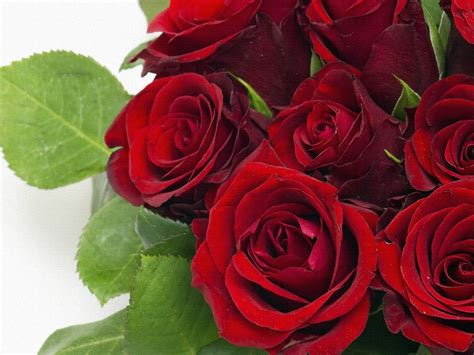 red rose bouquet wallpaper hd  wallpaperscom