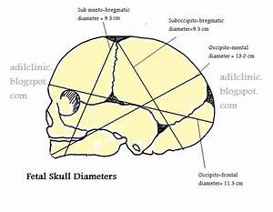 Fetal Skull Diameters  Diameter Of Skull Of Fetus At Time