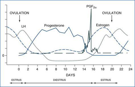 equine reproduction cycle estrus estrous ovulation hormone diestrus livestock days age key veteriankey