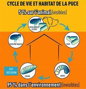 Puce De Chien : traitement naturel des puces de la maison et alentour ~ Melissatoandfro.com Idées de Décoration