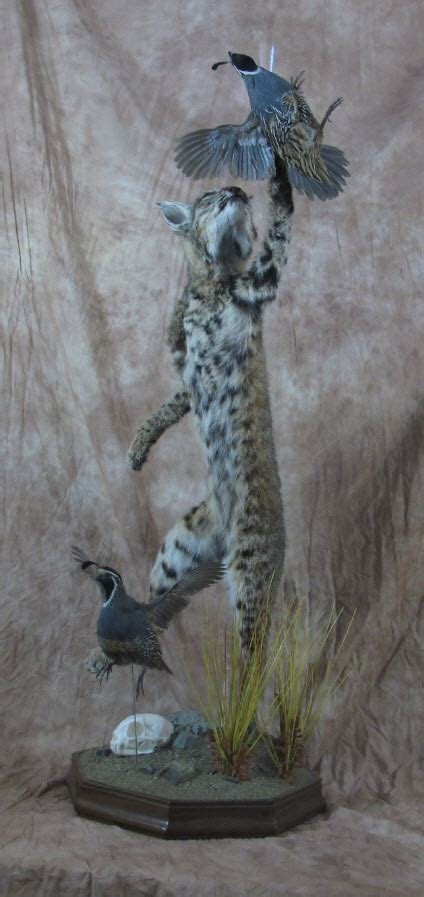 life size taxidermy examples mounts unlimited taxidermy