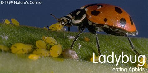 welcome to ladybug indoor gardens