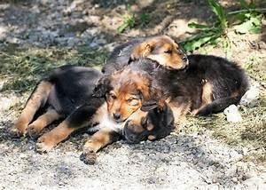 Ich Suche Einen Großen Hund : woher bekomme ich einen hund nicht alle vermittler sind ~ Jslefanu.com Haus und Dekorationen